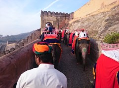 Elephant ride to the Amber Fort