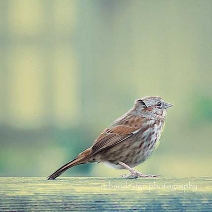 The Sparrow - 8x8 Fine Art Print