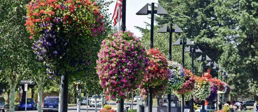 Hanging Flower Baskets
