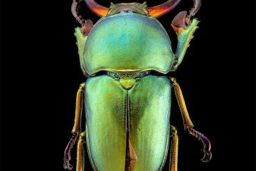 Francesco Bagneto Entomology Photography
