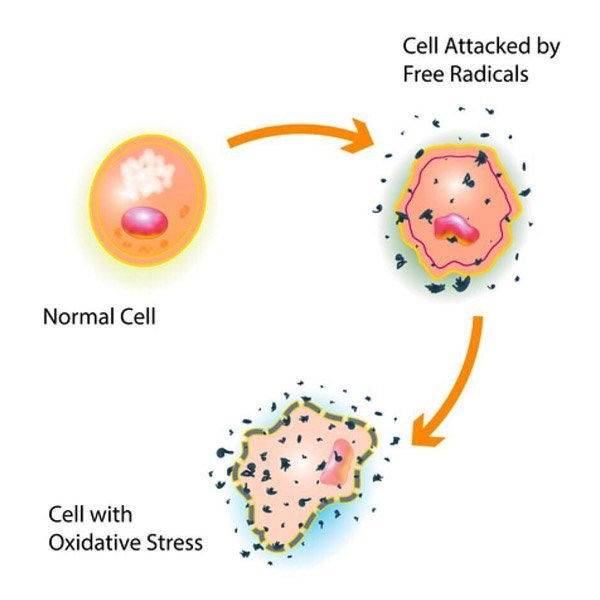 Skin Cells Attacked by Free Radicals
