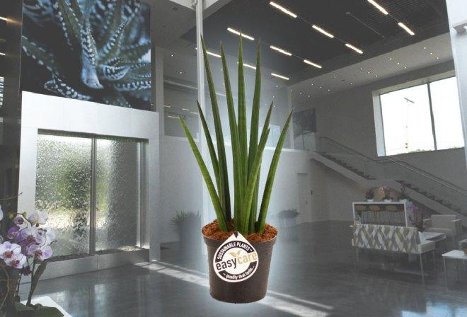plainview-easy-care-plants-11