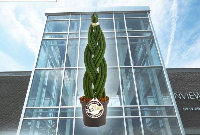 plainview-easy-care-plants-12