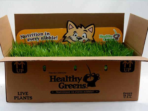 healthy-greens