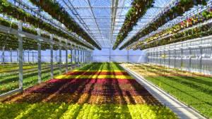 plainview-growers-allamuchy-nj-greenhouse-plants-orchids-annuals-succulents-nj-new-02