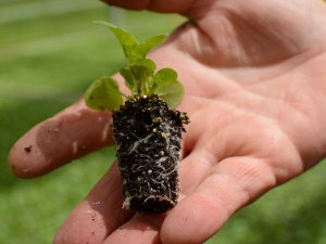 plainview-growers-plant-pro-plugs