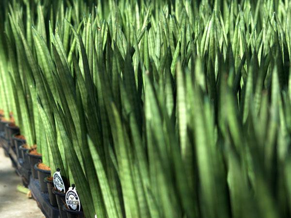 easycare-plants-succulents-pot-upgrades-greenhouse-growers-plainview