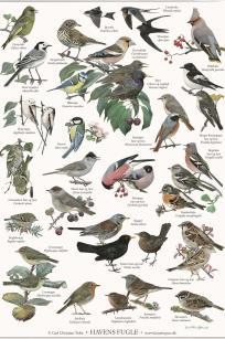 Havens fugle - Carl Christian Tofte