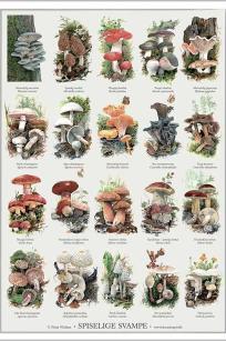 Spiselige svampe - Peter Nielsen