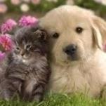 Pets Vision Board Ideas