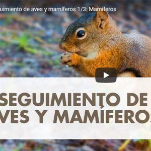 CHARLA TALLER: MAMIFEROS