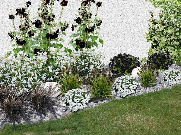 massif de fleurs blanches et noires