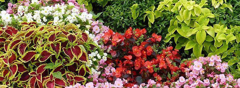 reussir vos massifs de fleurs d ete