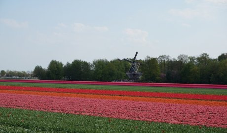 Tulips route by bike - The Netherlands