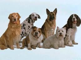 crianza de perros