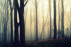 creeping mist