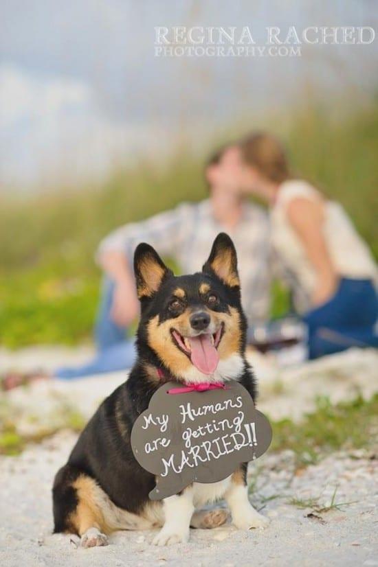 """Save the date com cachorro e lousinhas. """"Meus humanos vão se casar"""". Foto: Regina Rached."""