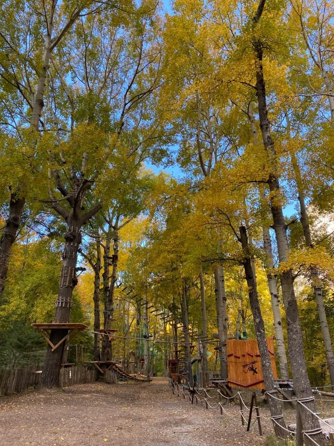 fall foliage in amusement park