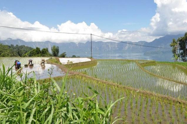 10 raisons de passer à une agriculture durable