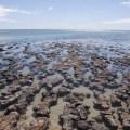 stromatolites Australie
