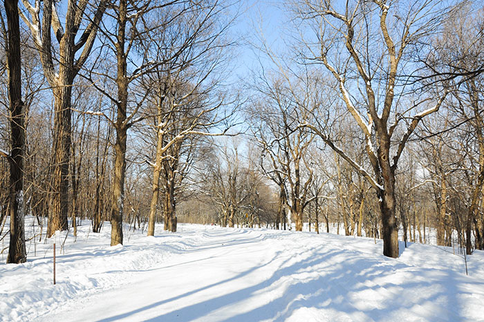 Hiver Montreal : Mont Royal