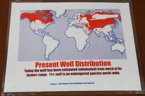 Loup Gris : distribution après