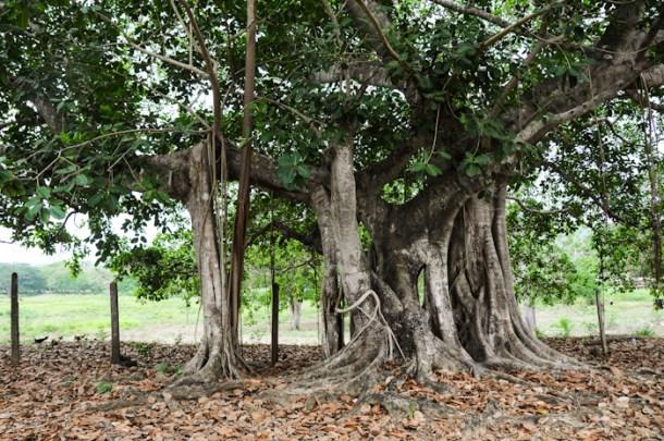 20150529-tree-004