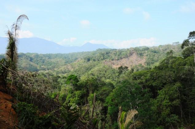 Écovolontariat : Préserver les forêts avec Envolvert en Colombie