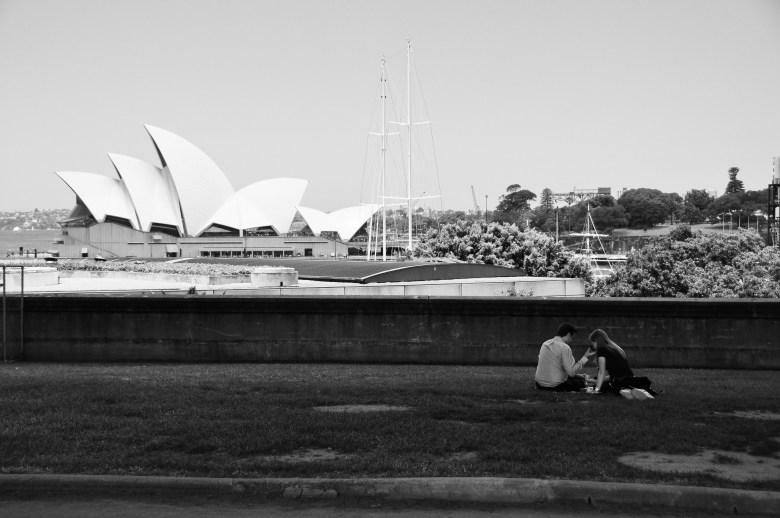 Love birds Sydney