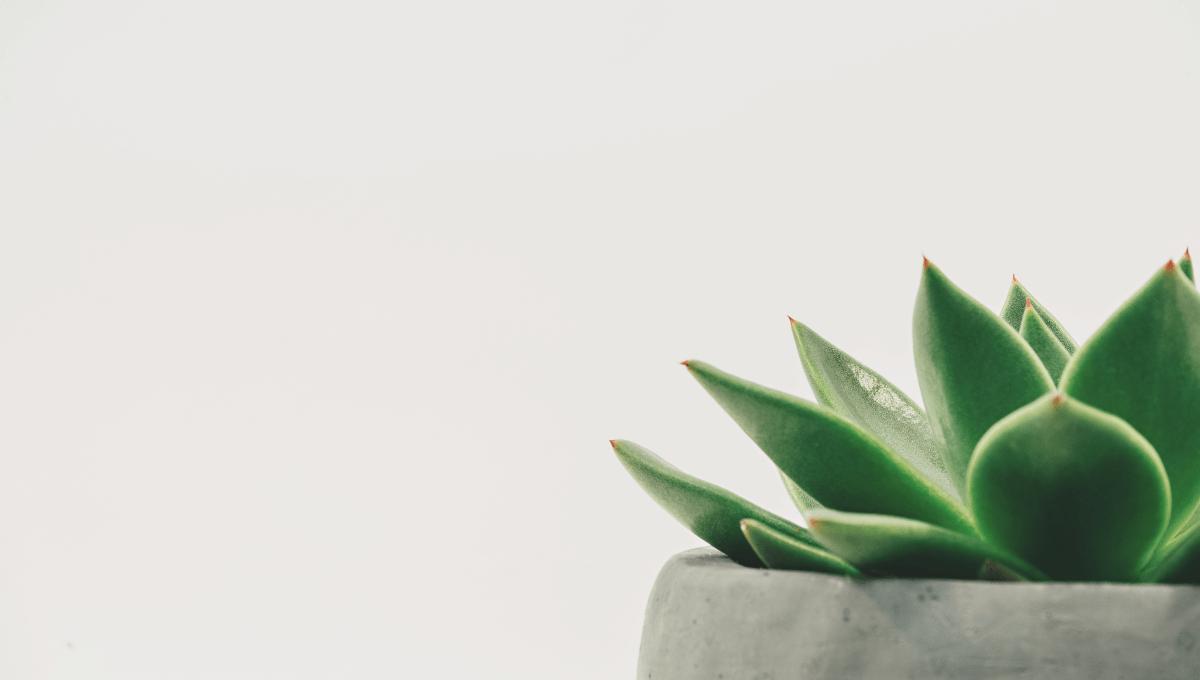 Read more about the article Le minimalisme, pourquoi c'est important ?