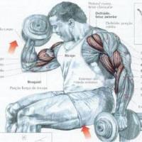 Bíceps Alternado com Halter
