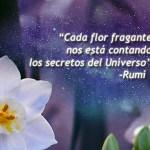 Las mejores frases y reflexiones de Rumi