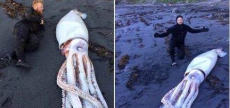 Submarinistas Profesionales Encuentran un Calamar Gigante