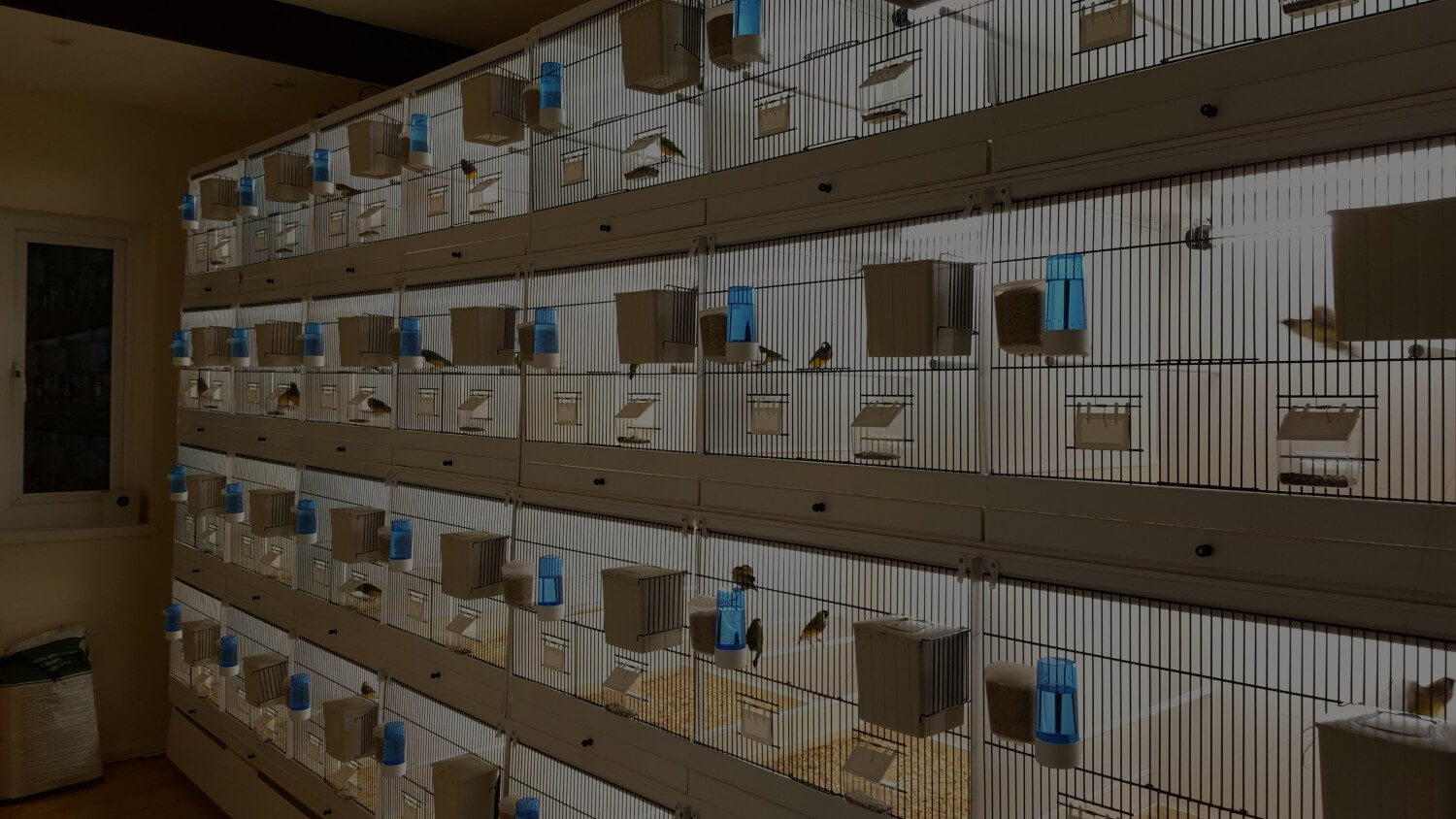 Part 6 My Gouldian Finches Planet Aviary