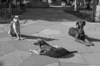 Creel plaza and dogs
