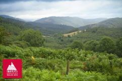 Views near Machynlleth