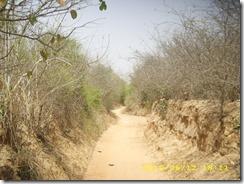 Ravinement sur le chemin du village_Yéba