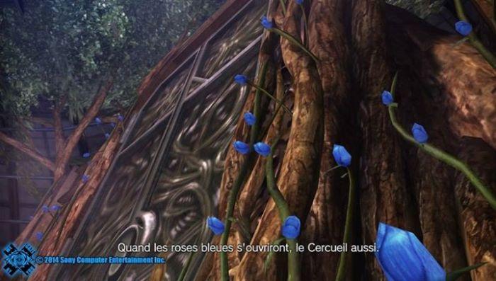 Les roses bleues du Cercueil