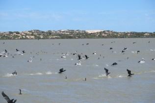 tauwitchere-waterbirds