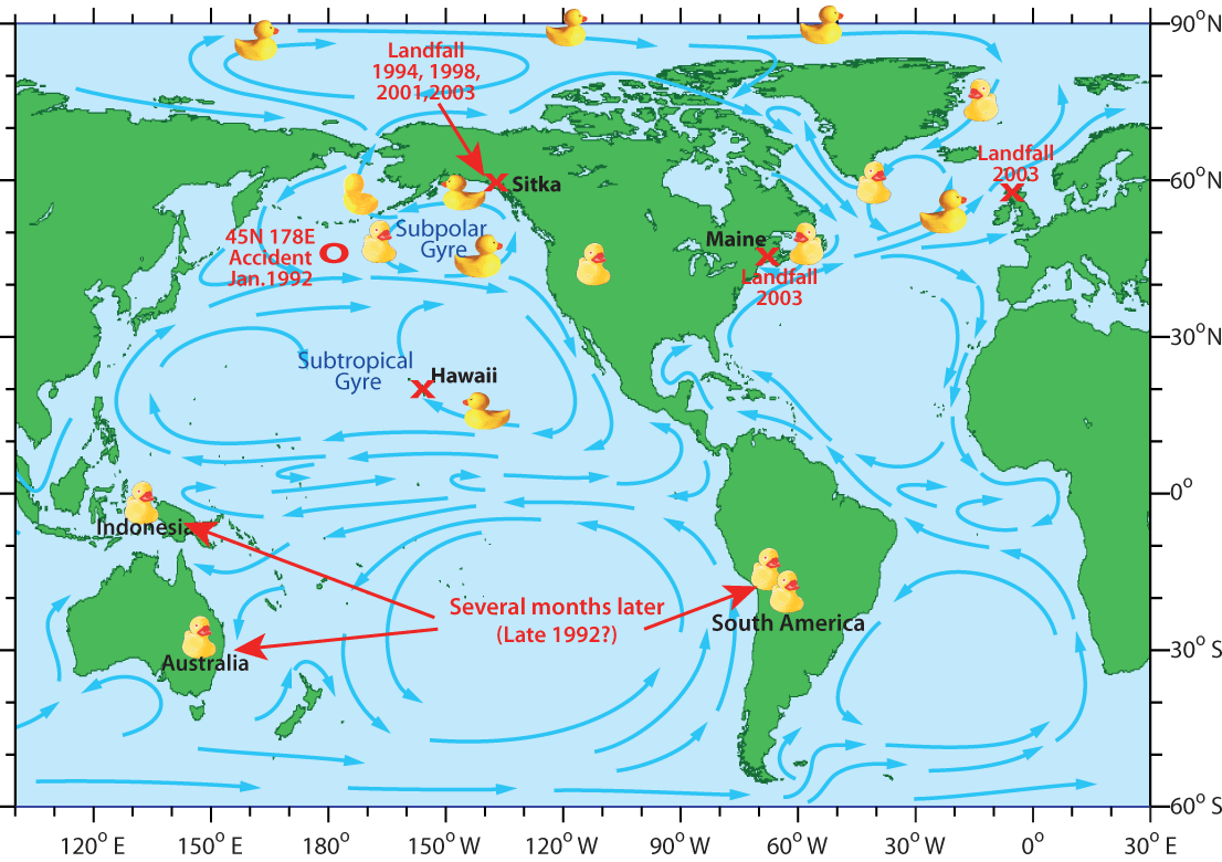 Migration Route Of The Common Pacific Rubber Duck Planet