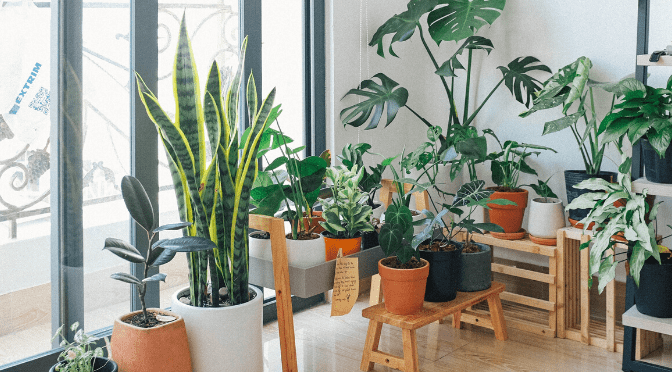 Should my house plants touch each other?