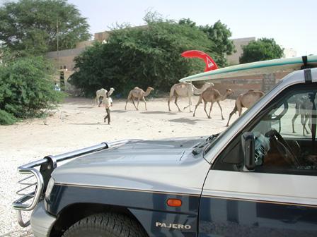 Camels andcar.jpg