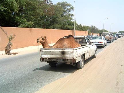 camels-vs-cars-solution.jpg