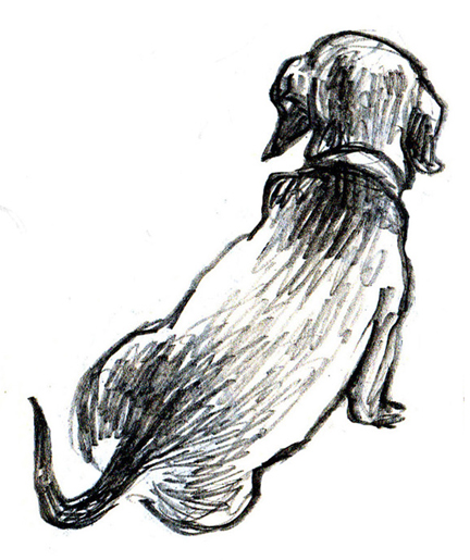 drawing of miniature dachshund
