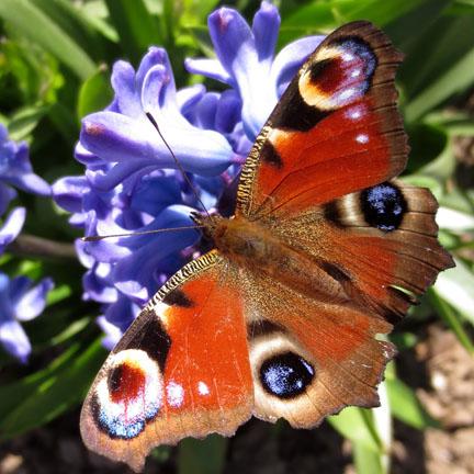 butterfly in sunshine