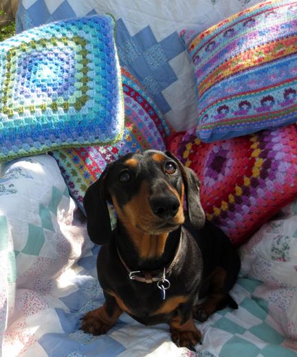 Miniature dachshund in garden chair