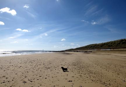 Norfolk beach and miniature dachshund