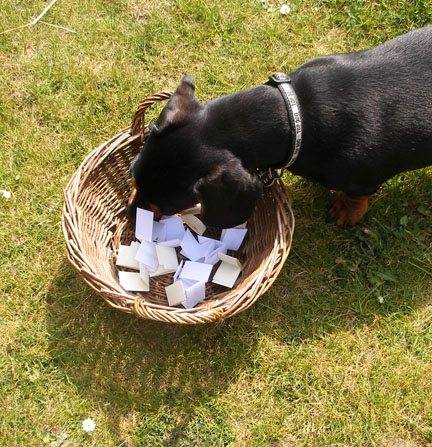 mini dachshund drawing winning ticket