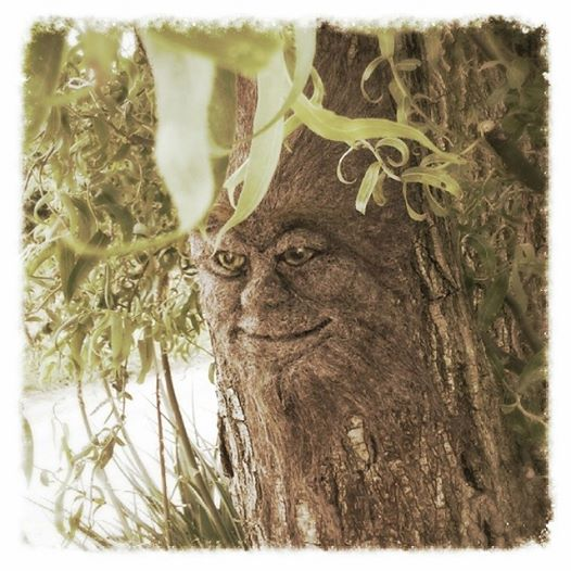 Needlefelt man in the tree NNOS