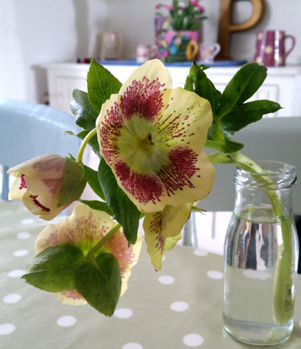 hellebore - spreading the love on International Happiness Day